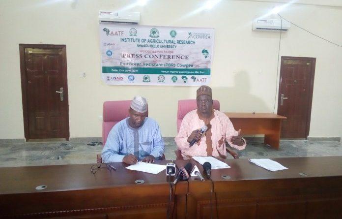 How ABU Zaria Save Nigeria N16bn Annually With Pod Borer Resistance Cowpea 1