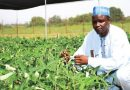 Cowpea developed by IAR-ABU Zaria scientists to be released commercially 7