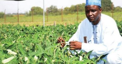 AATF urges cowpea farmers to cultivate ABU made SAMPEA-20T 5